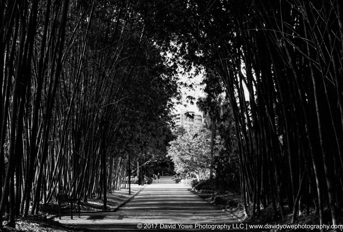 15_Brisbane City Gardens