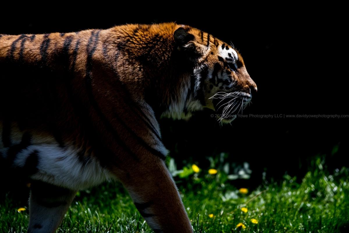 2017_Zoo_A86I1165