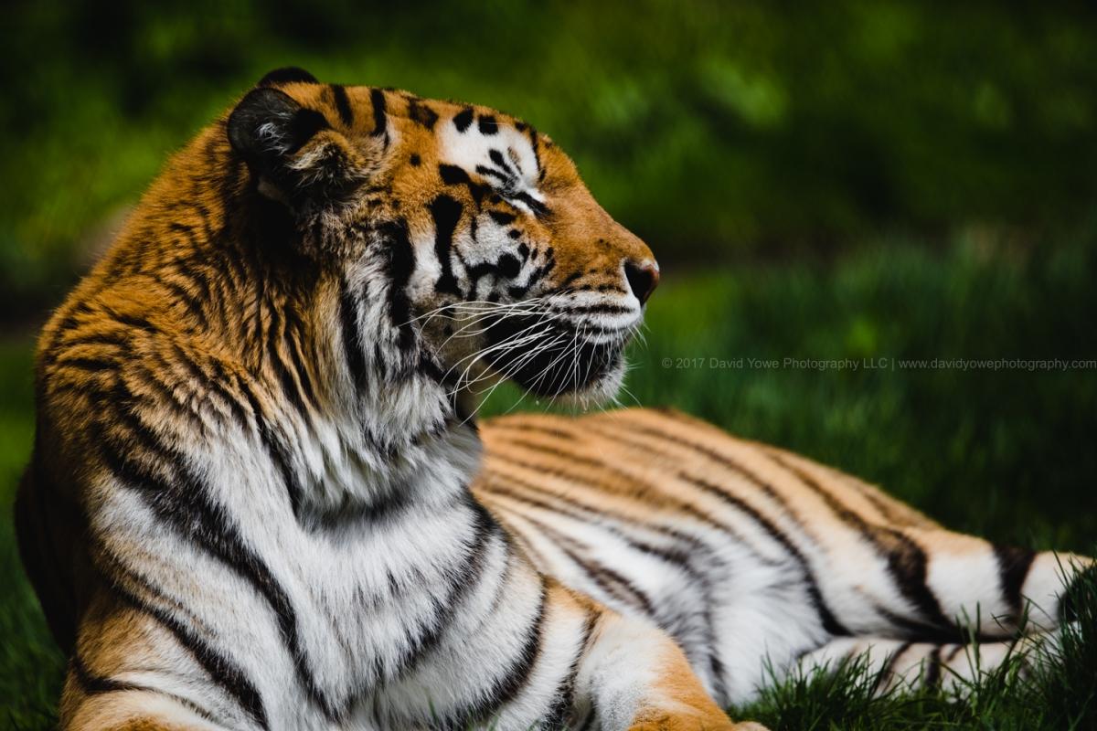 2017_Zoo_AC5I1210