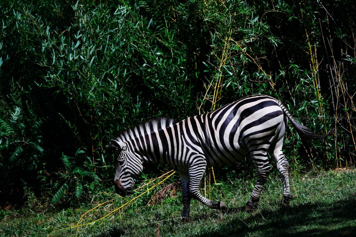 2017 Franklin Park Zoo (DLY_9373)