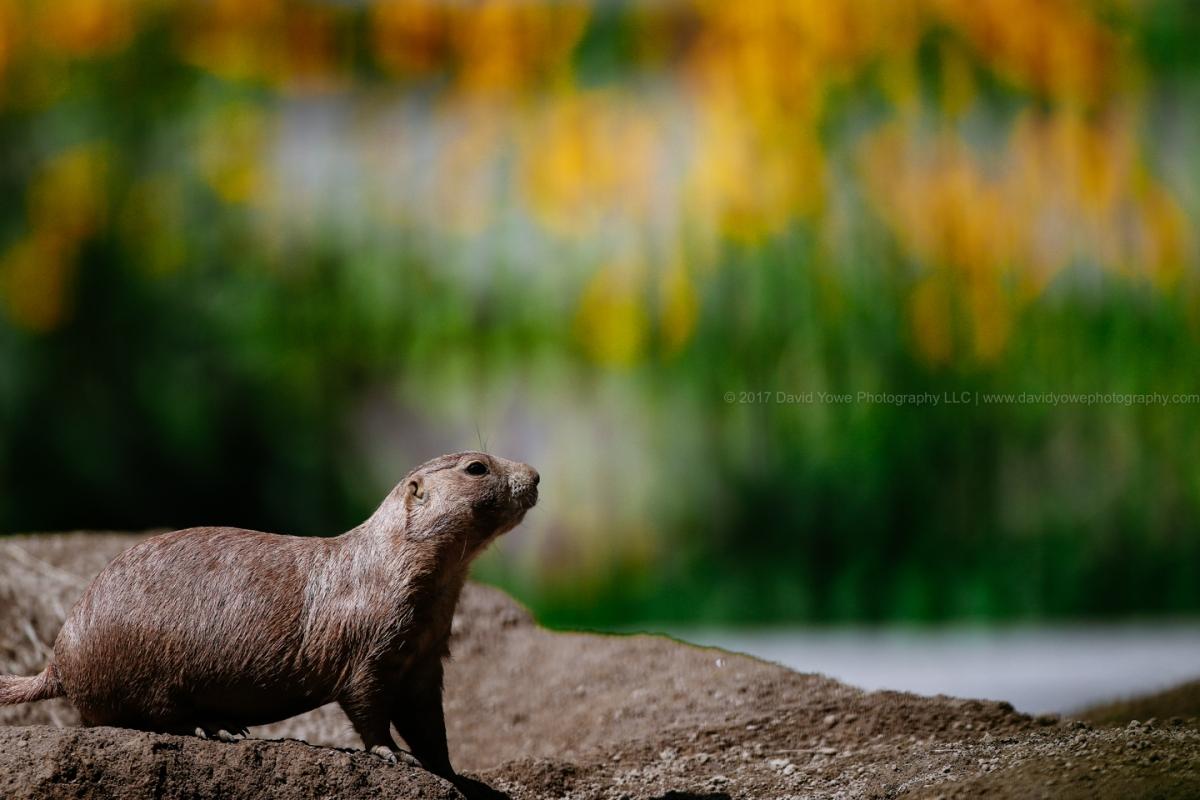 2017 Franklin Park Zoo (DLY_9380)