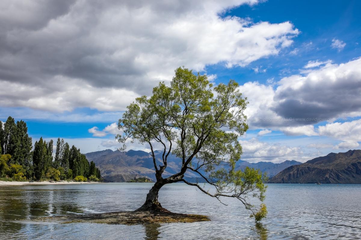 2018 NZ (DLY_2108)