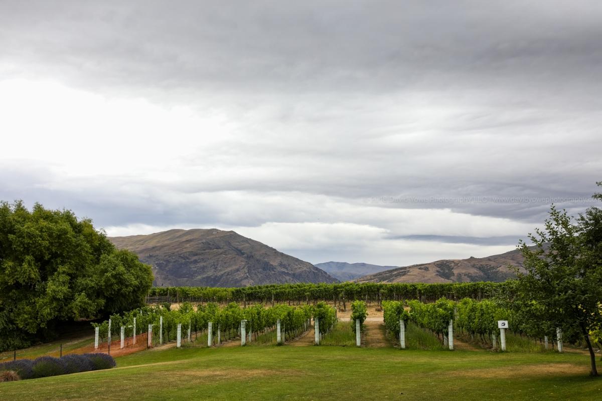 2017 NZ (DLY_2628)